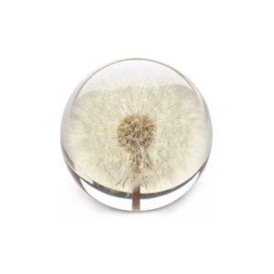 dandelion large