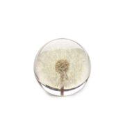 dandelion small