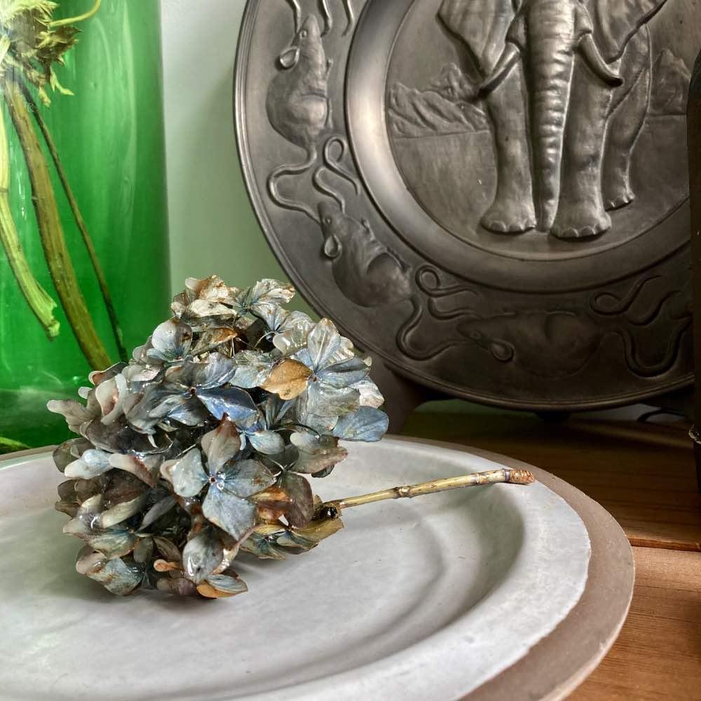 Hortensies by Roos Soetekouw